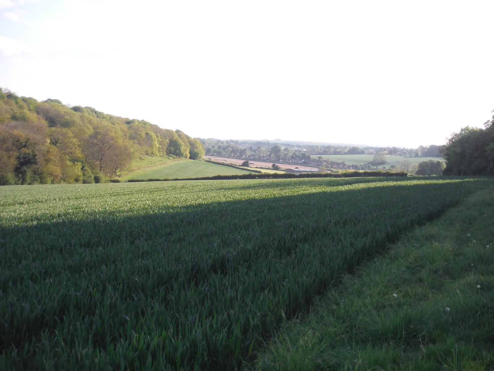 View towards Rowlands Castle SWC Walk Rowlands Castle Circular