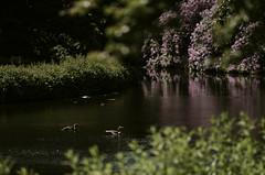 Park Clingendael, Den Haag