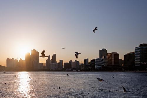 ocean sunset sea people sun building skyline skyscraper haze cityscape wind seagull windy shore busan highrise southkorea seaofjapan flyingbird haeundaebeach canon40d