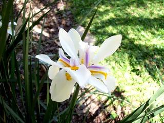 Plantas, flores e arvores (11)