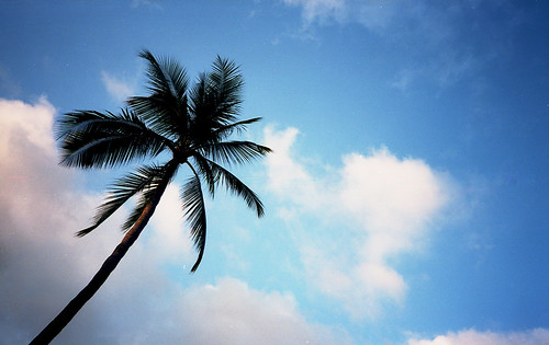 Samui Palm | by H_H_Photography