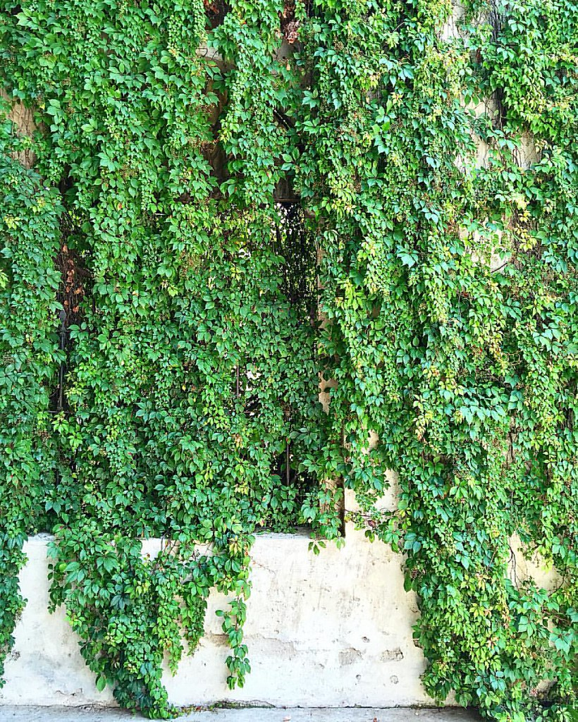 Green wall #green #nature #plants #architecture #iphonesia… | Flickr