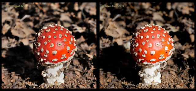 Fly agaric in the sunlight -3d crossview