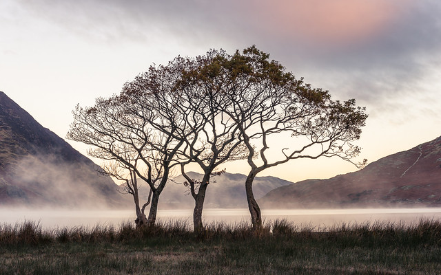 Crummock Trees LPOTY 2014 Classic View runner up