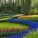 1-garden by rwindfield