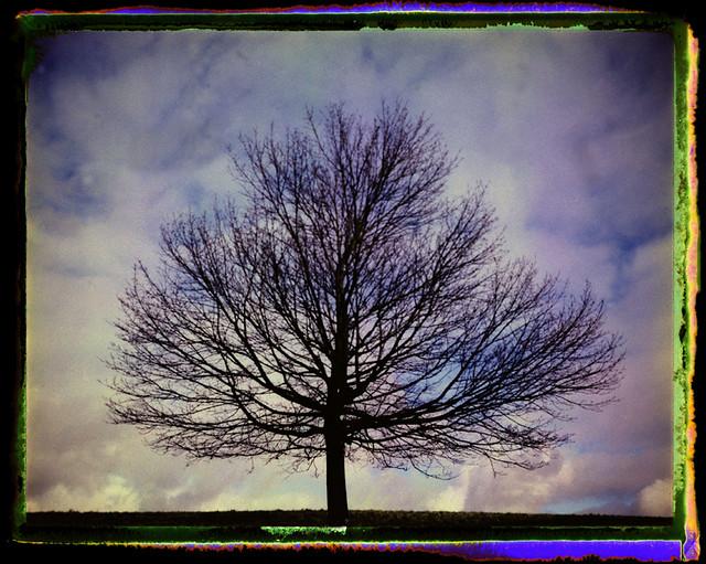 Winter Tree Fuji Fp 100 c negative