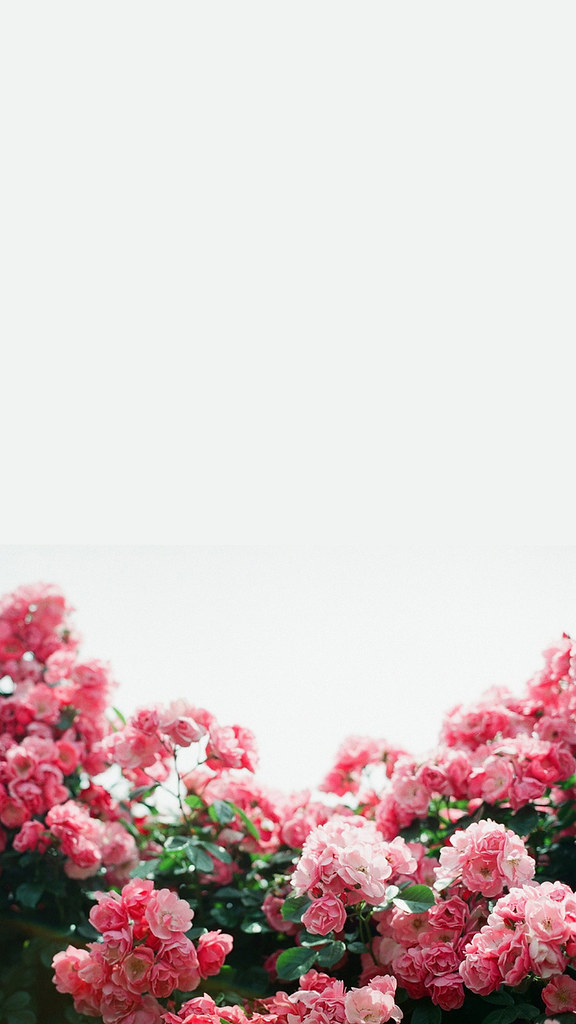 Iphone Wallpaper Spring Symphony March 2015 Found On Tu