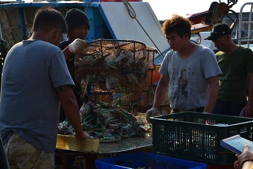 圖9.傍晚時分,在富基漁港等待滿載而歸的漁船入港,看新鮮的漁獲現場交易,是難得的體驗。