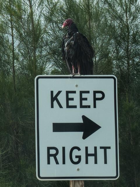 A sign or an omen?
