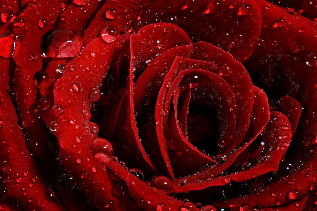 Image: Petals