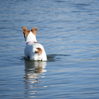 Dog in water | by Kitty Terwolbeck