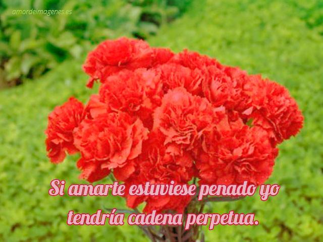Imágenes De Claveles Rojos Con Frases Hola Mis Queridos Am