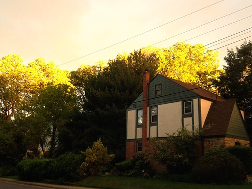 trees houses light sunset maryland baltimore neighborhood magichour iphone