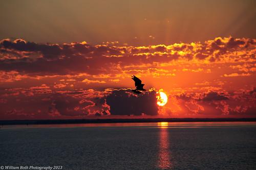 lake reflection clouds sunrise nikon florida wildlife osprey crepuscularrays d90