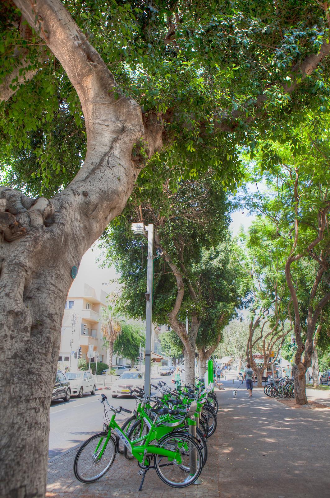 IMG_6958_59_60_Rotschild Blvd_Tel Aviv_Dana Friedlander_IMOT