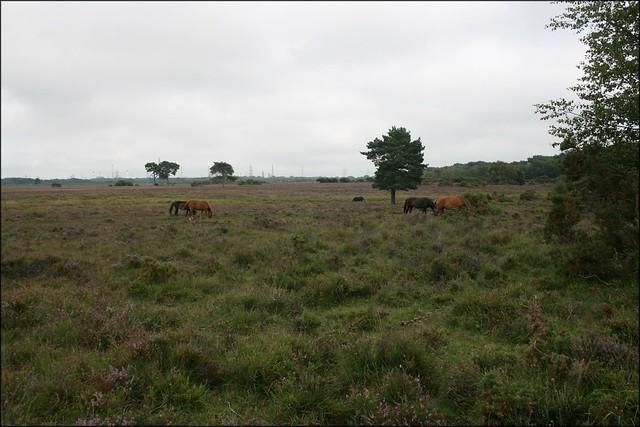 Beaulieu heath
