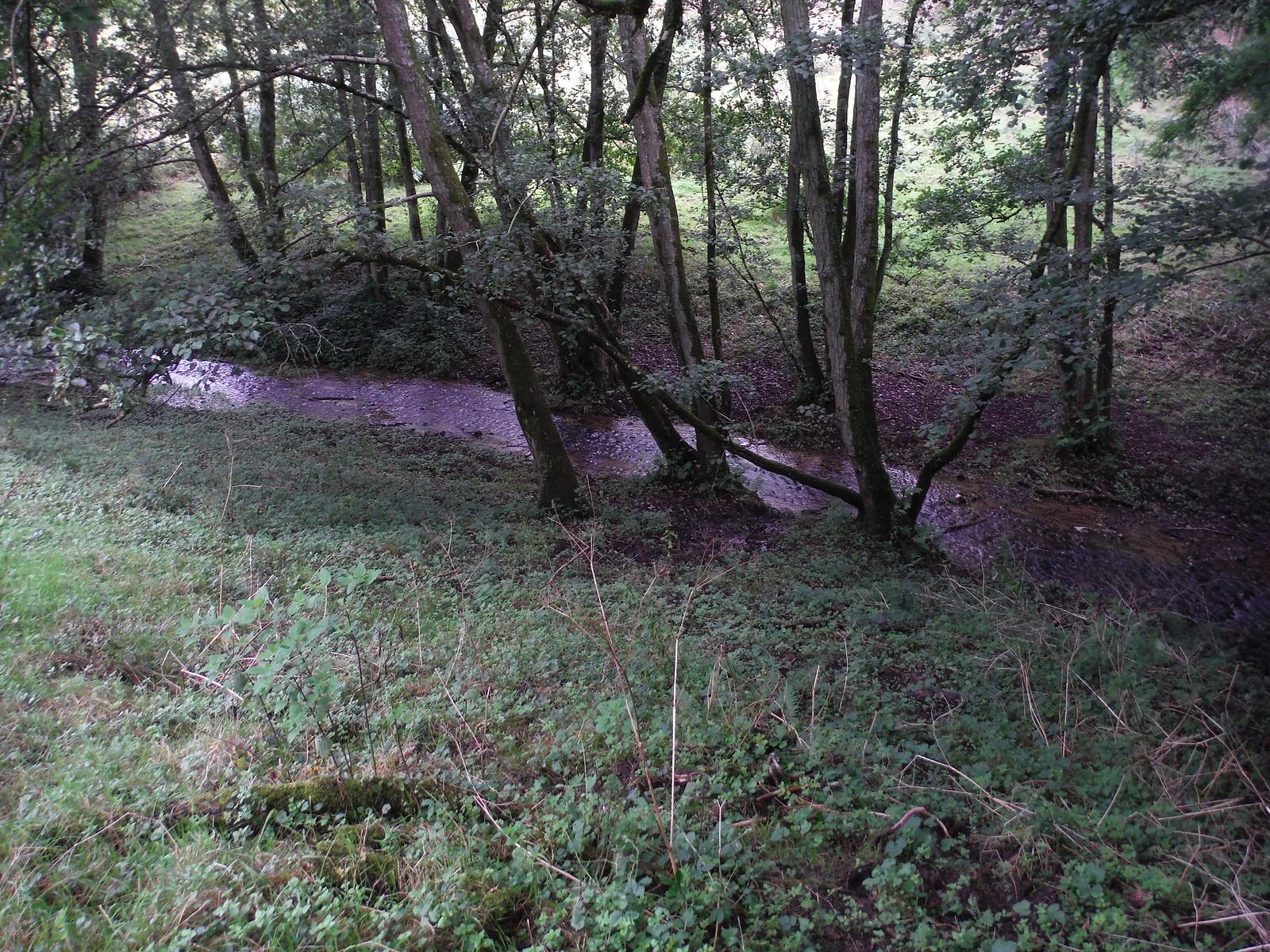 Oddford Brook (I) SWC Walk 248 Tisbury Circular via Hindon