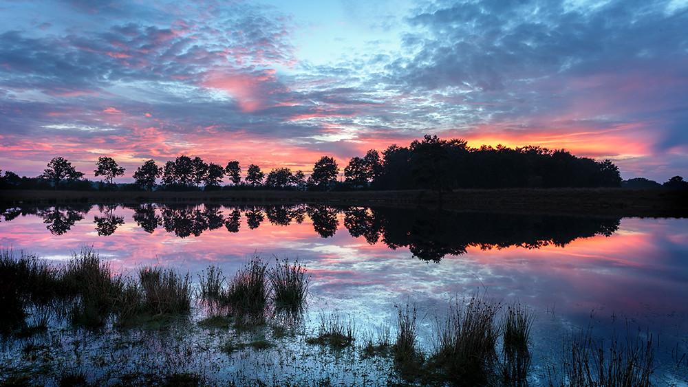 Friesland Stream