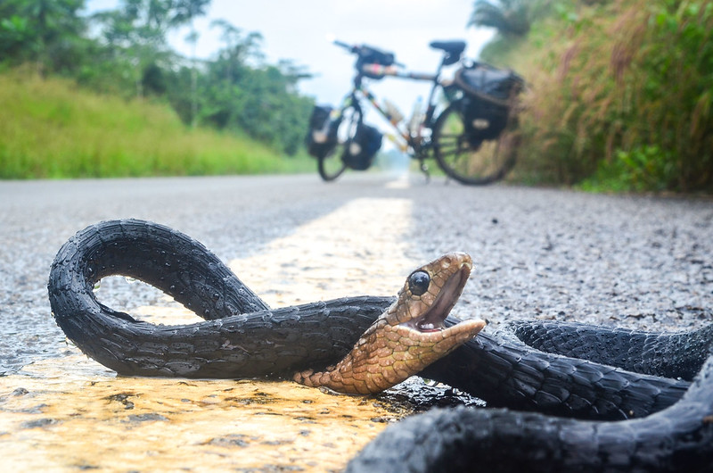 Day403-Bike-131211