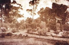 Wattle League Garden 31Aug1918 Gawler Oval in memory WWI servicemen