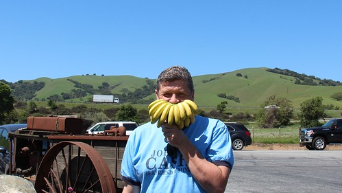 bananastache
