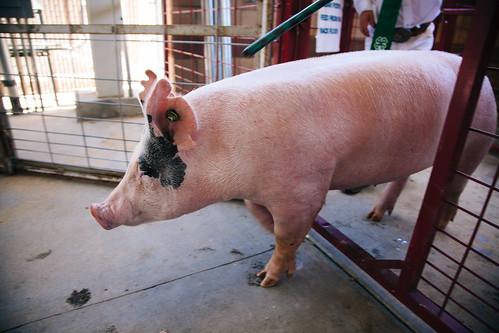 This Little Piggie | by shaycam