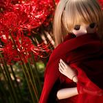 Temptation of cluster amaryllis:紅い華に誘われたから_04