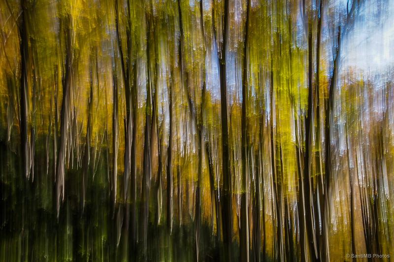 Bosque trepidado