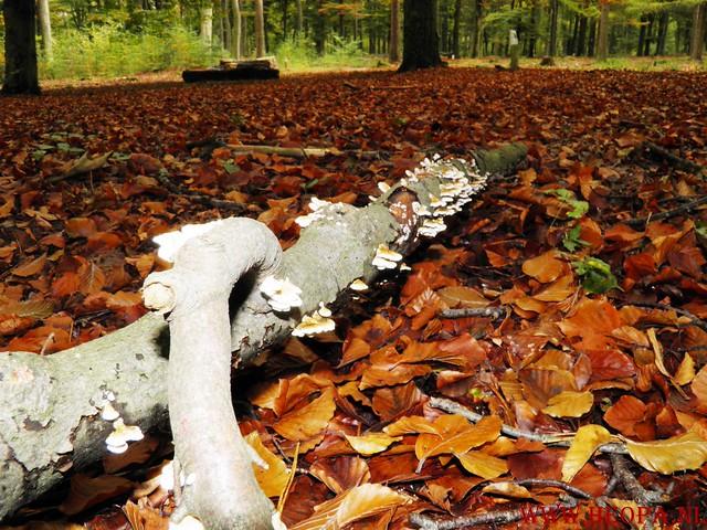 20-10-2012     Wedeblick-   Driebergen        25 Km (132)