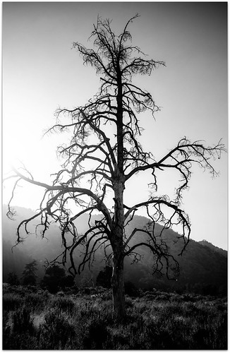 sunset blackandwhite bw mountains tree silhouette burned wildfire radlab wrightwoodcalifornia nikond7000