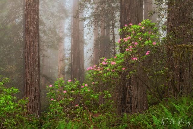 Flowering Among Giants
