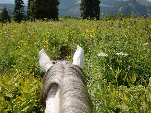 horse ear view of wildflowers | by Wild Wilderness Adventures