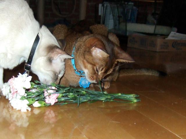 gunhee-trick_flowers
