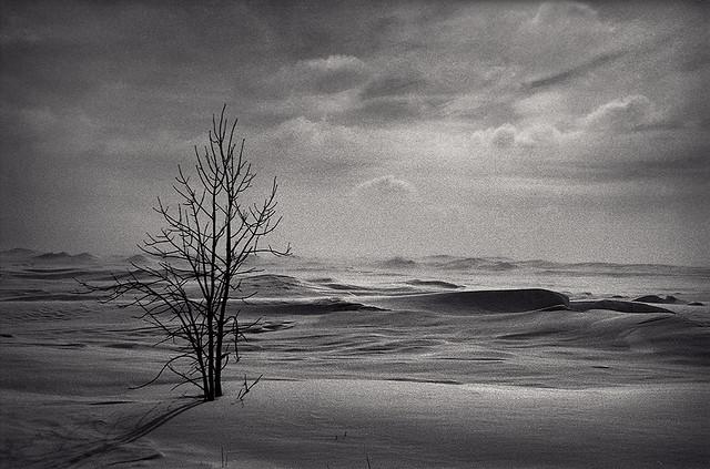 Ice Desert Tree