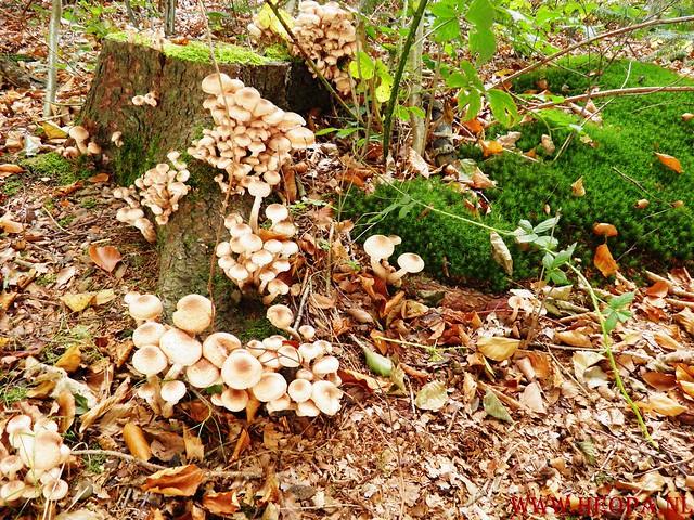 20-10-2012     Wedeblick-   Driebergen        25 Km (151)