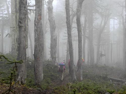 chile trekking backpacking bosque andes araucaria niebla lengas parquenacional chilecentral regióndelaaraucanía parquenacionalvillarrica