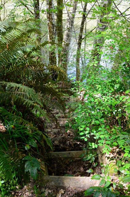 Steps down to the Oyster River on my B.C. property