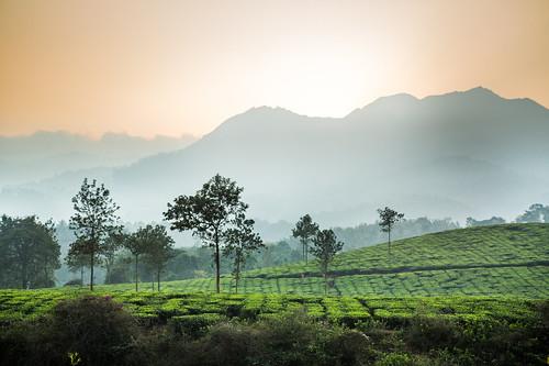 travel chris sunset india chicago color landscape found tea kerala traveling murphy chrismurphy teaplantation photons