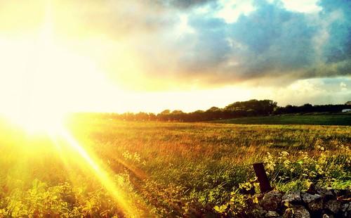 Sundown Sorrel | by William Parsons Pilgrim