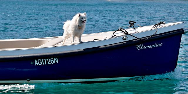 Dog On Deck.