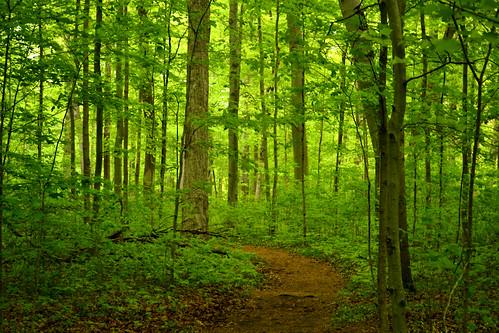 michigan warrenwoodsstatepark