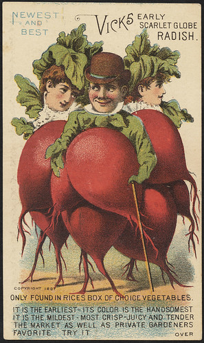 Newest and best. Vick's early scarlet globe radish. Only found in Rices box of choice vegetables. (front)