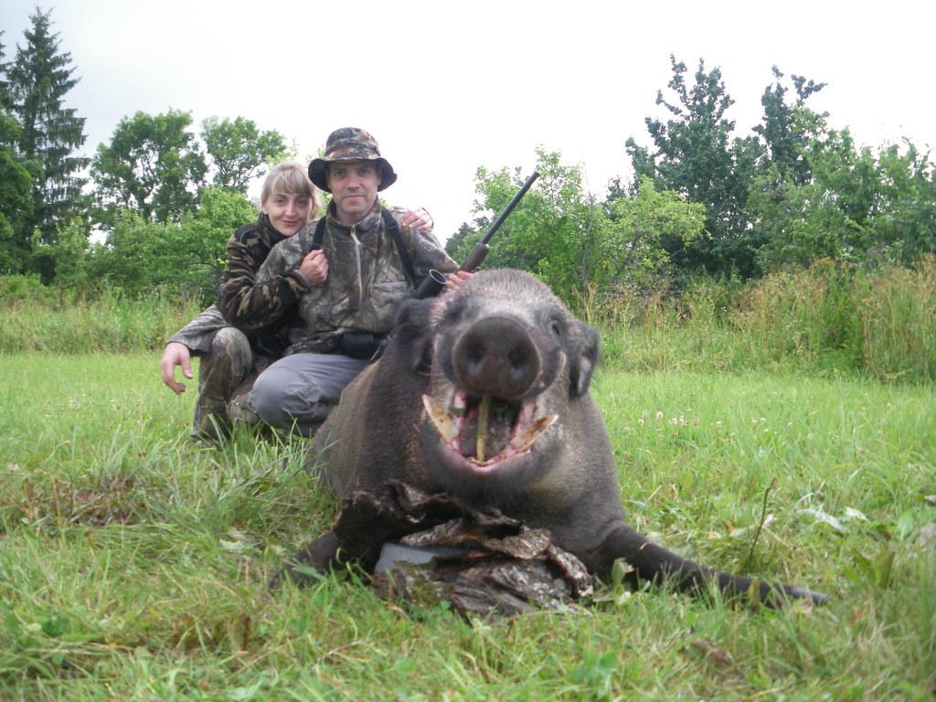 Wild Boar hunting in Estonia, Come hunt the largest wild