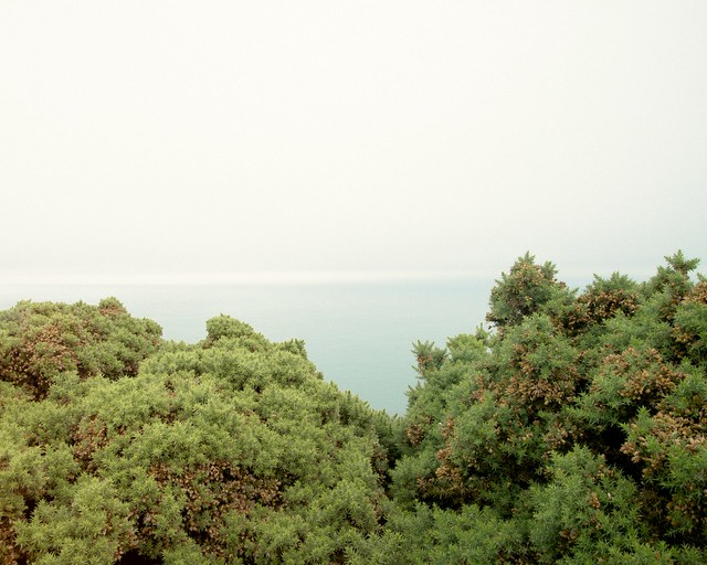 gorse, sea, sky