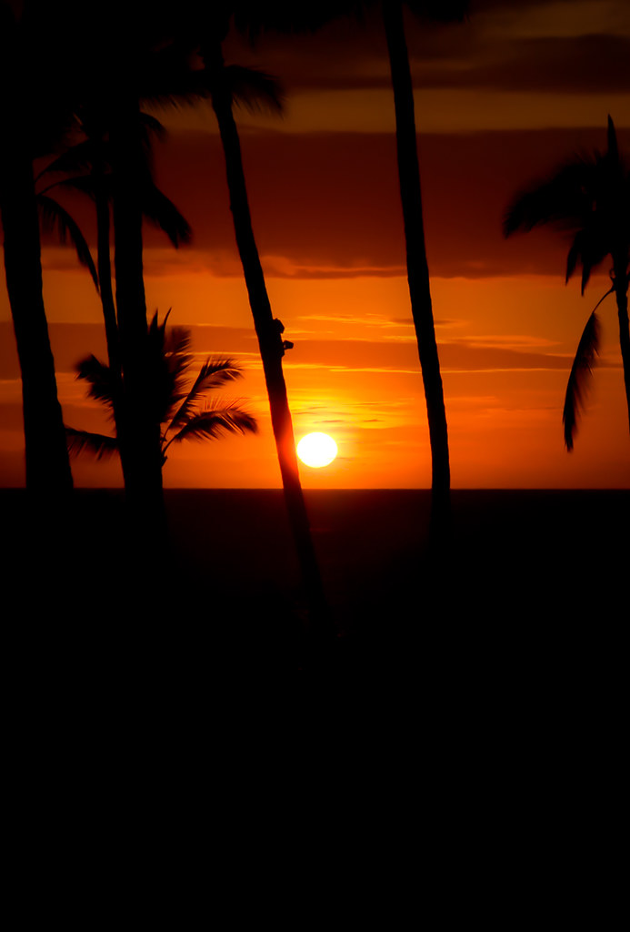 Ios 7 Maui Beach Palm Tree Sunset Parallax Wallpaper Flickr