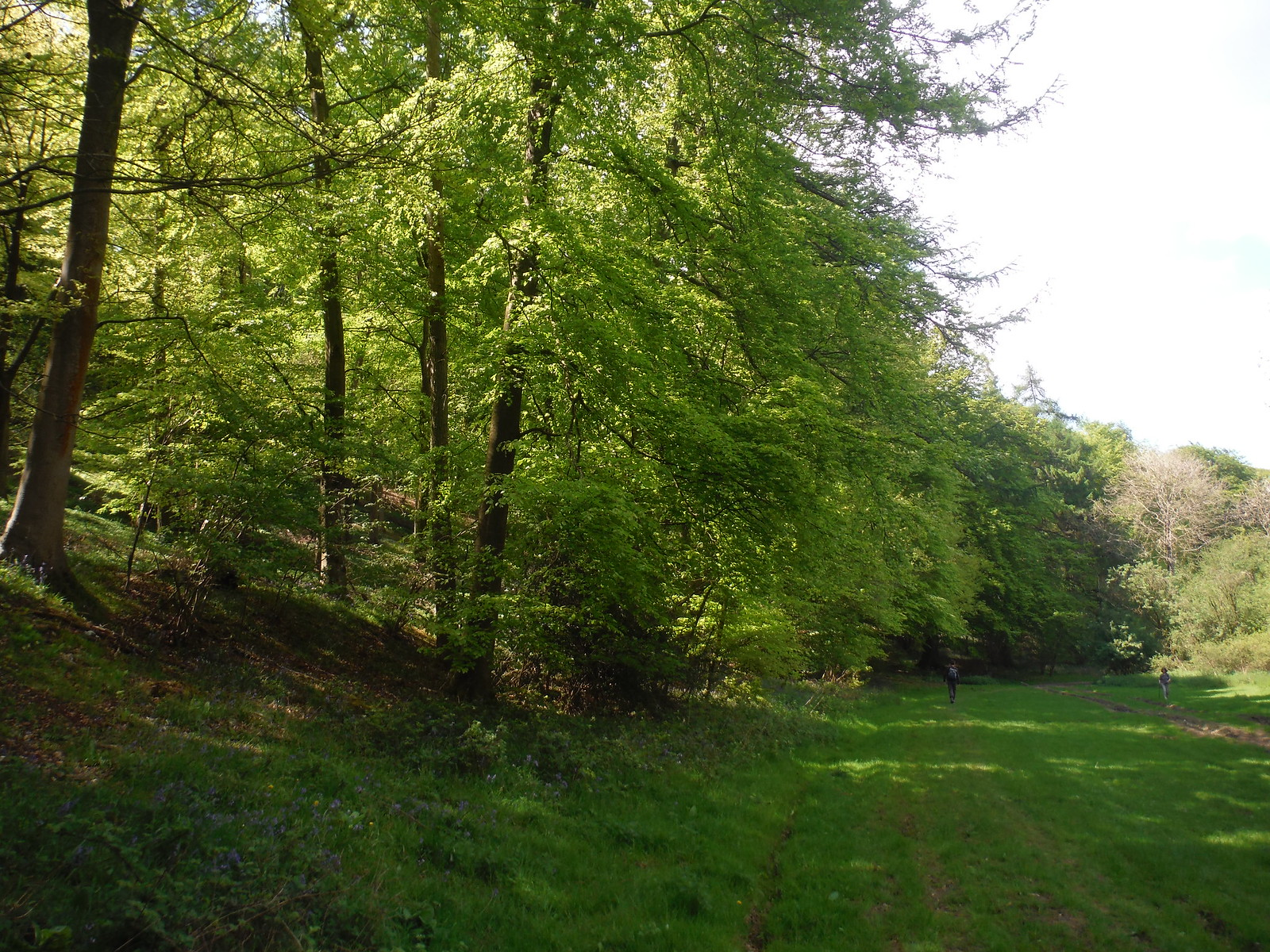 Germanleith Copse SWC Walk Rowlands Castle Circular - Extension