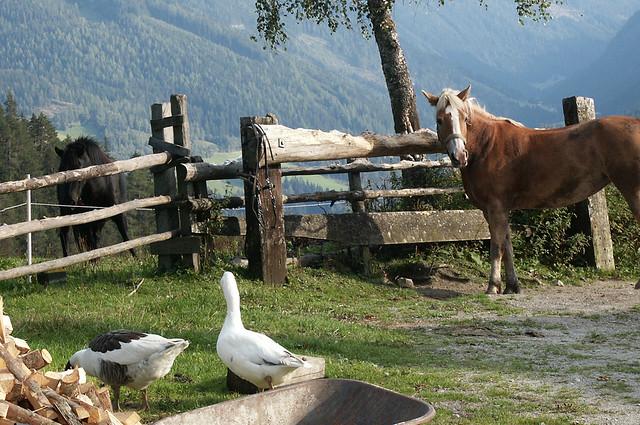 Ramsau Steiermark PICT0024