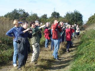 Guided bird walk at Beddington Farmlands, by Peter Alfrey