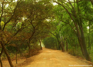 Way to Sonajhuri Forest - Shantiniketan, West Bengal | by moon@footlooseforever.com