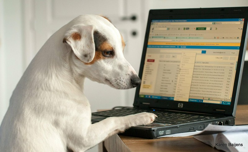A white and brown short-haired dog places their right front paw on top of a open laptop keyboard. The laptop screen shows a blurred Gmail inbox window.